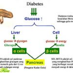 Bio Glukol Herbal Insani | Herbal Diabetes Millitus